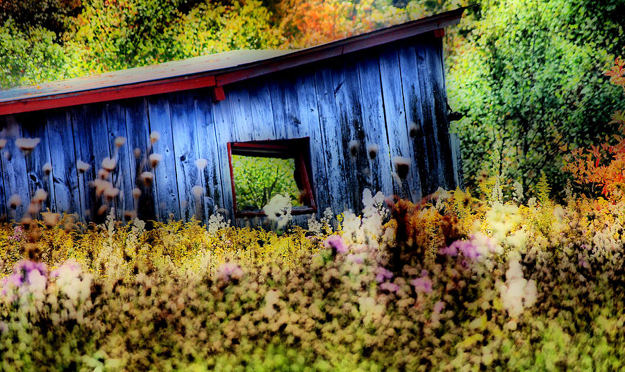 Blue Shed Photograph - Beauty Of The Blue  by Emily Stauring