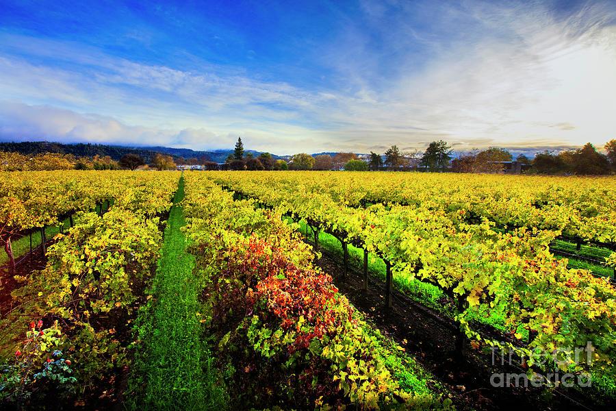 Napa Photograph - Beauty Over The Vineyard by Jon Neidert