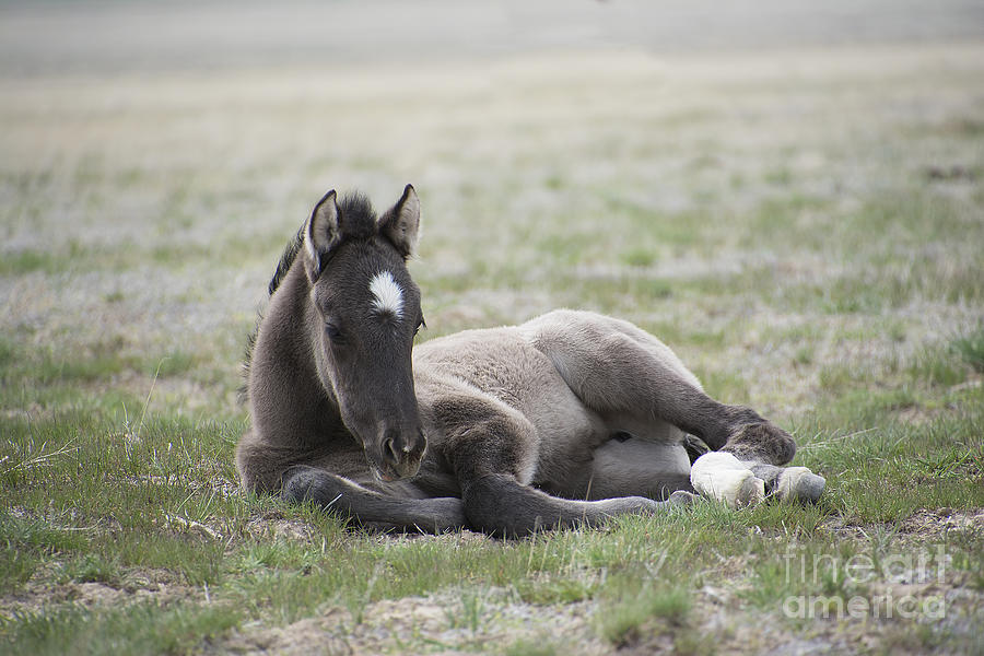 Nikon Photograph - Beauty Rest by Nicole Markmann Nelson