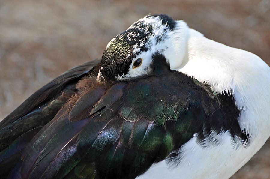 Bird Photograph - Beauty Rest by Teresa Blanton