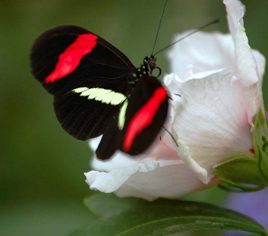 Butterfly Photograph - Beauty by Scott Gould