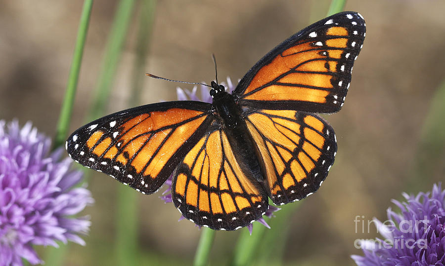 Beauty With Wings Photograph by Deborah Benoit