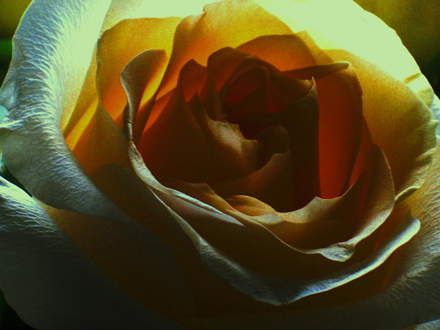 Rose Photograph - Beauty Within by Erika Lesnjak-Wenzel