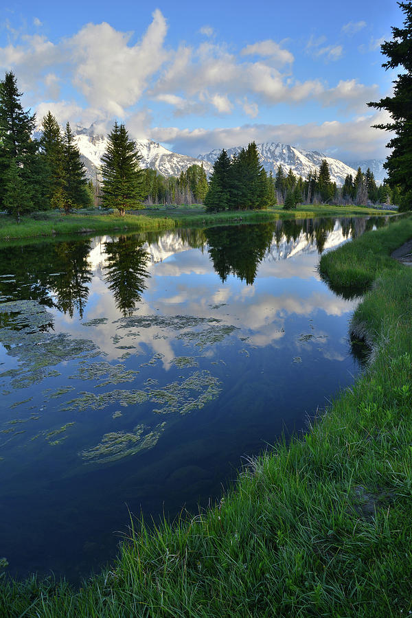 Grand Teton National Park Photograph - Beaver Dam At Schwabacher Landing by Ray Mathis