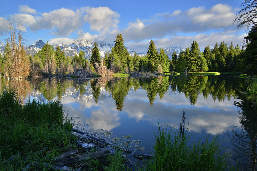 Grand Teton National Park Photograph - Beaver Dam Reflection In Grand Teton Np by Ray Mathis