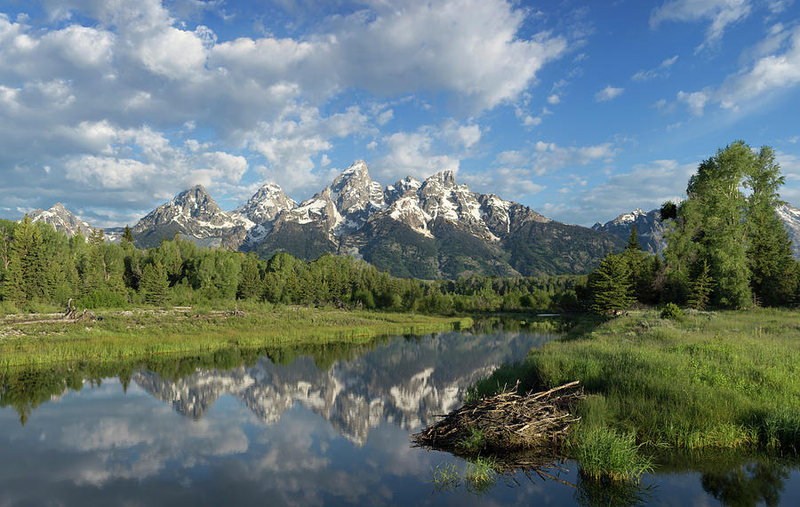 Beaver Photograph - Beaver Lodge And Tetons by George Sanquist