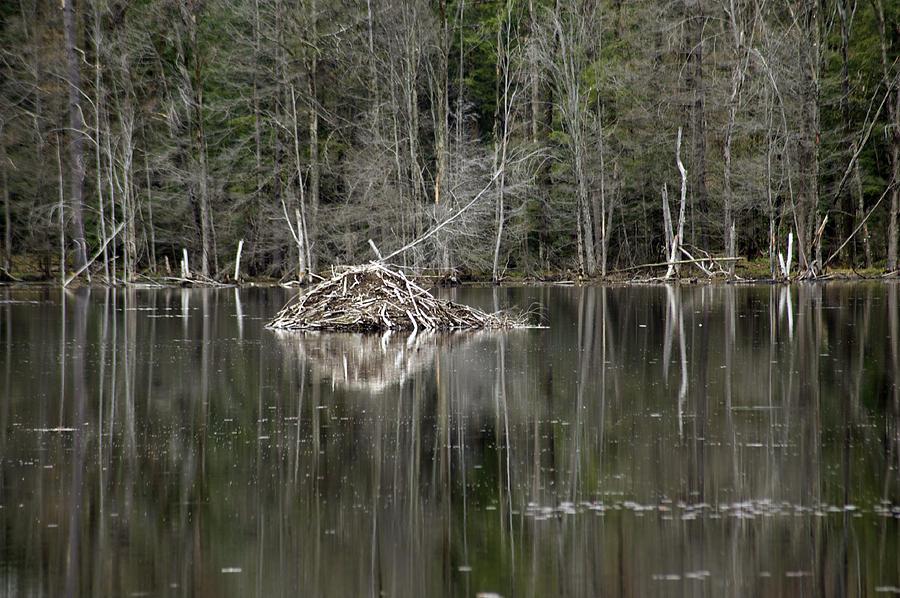 Beaver Photograph - Beaver Lodge Reflections by Elaine Mikkelstrup