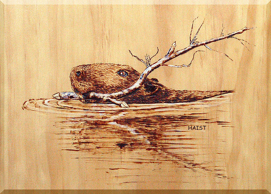 Beaver Pyrography - Beaver by Ron Haist