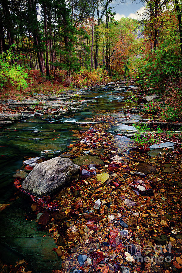 Landscape Photograph - Beavers Bend Tiny Stream Vertical by Tamyra Ayles