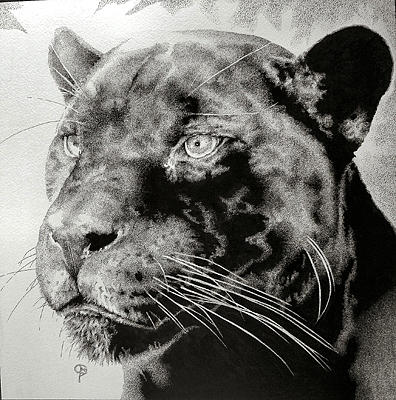 Panther Drawing - Bebes Kitty by Bobby Kro