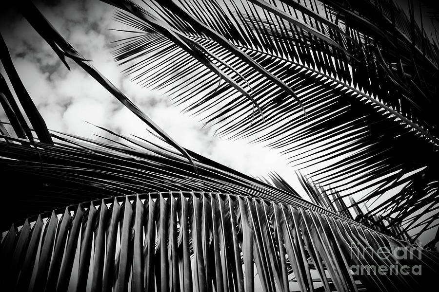Maui Paradise Palms Monochrome by Sharon Mau