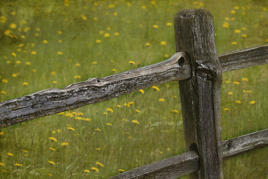 Fence Photograph - Beckoning by Rebecca Cozart