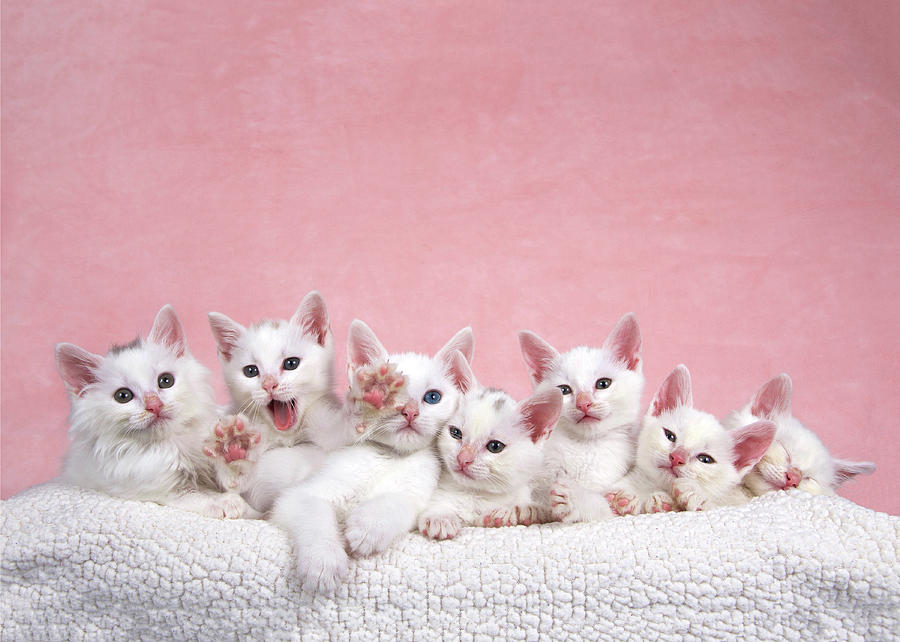 Small Photograph - Bedtime Kittens Im Not Tired Mom by Sheila Fitzgerald