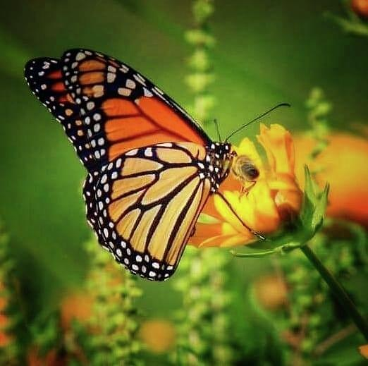 Bee And Butterfly Photograph by James Caine