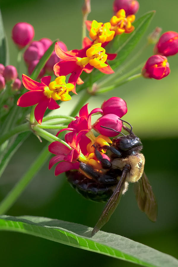 Bee Photograph - Bee And Flowers by E Mac MacKay