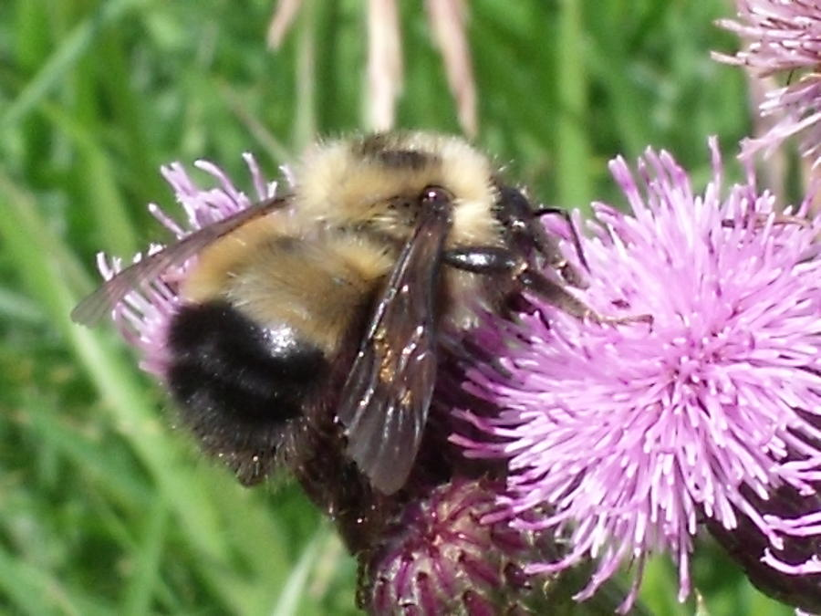 Nature Photograph - Bee by Angela Christine