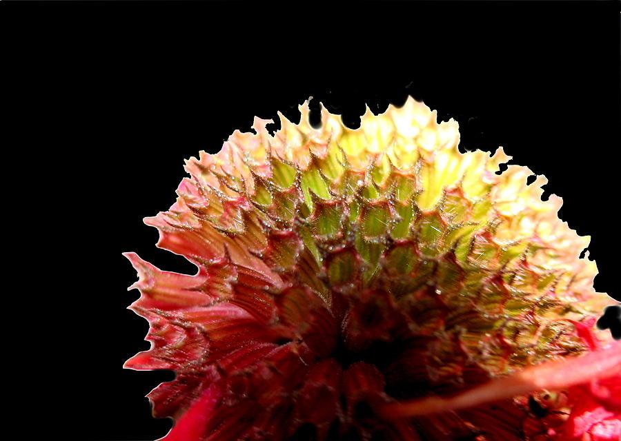 Bee Balm Photograph - Bee Balm by Diane Merkle