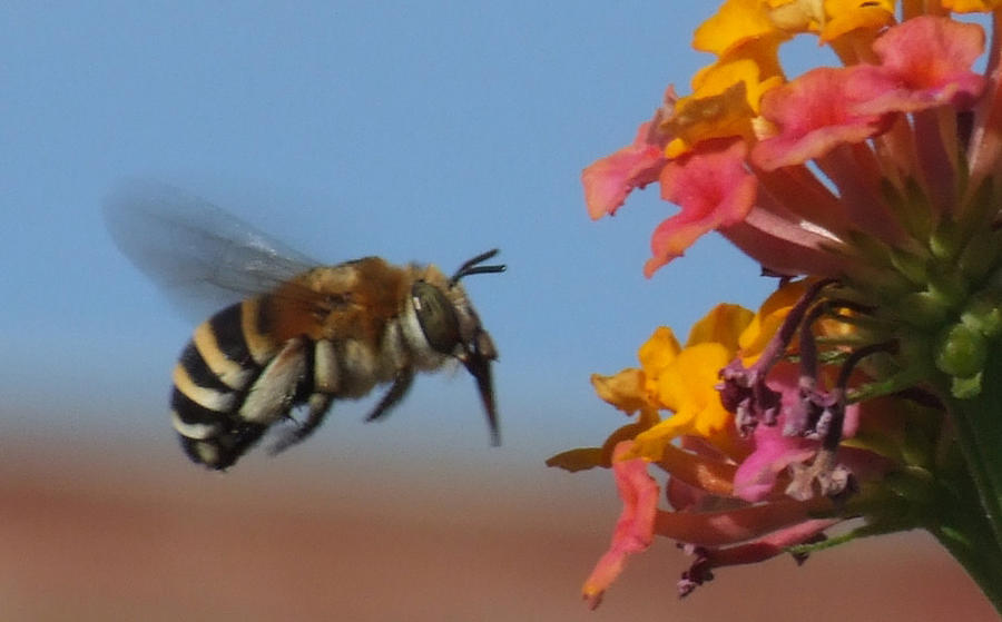 Bee  Photograph by Bill Vernon