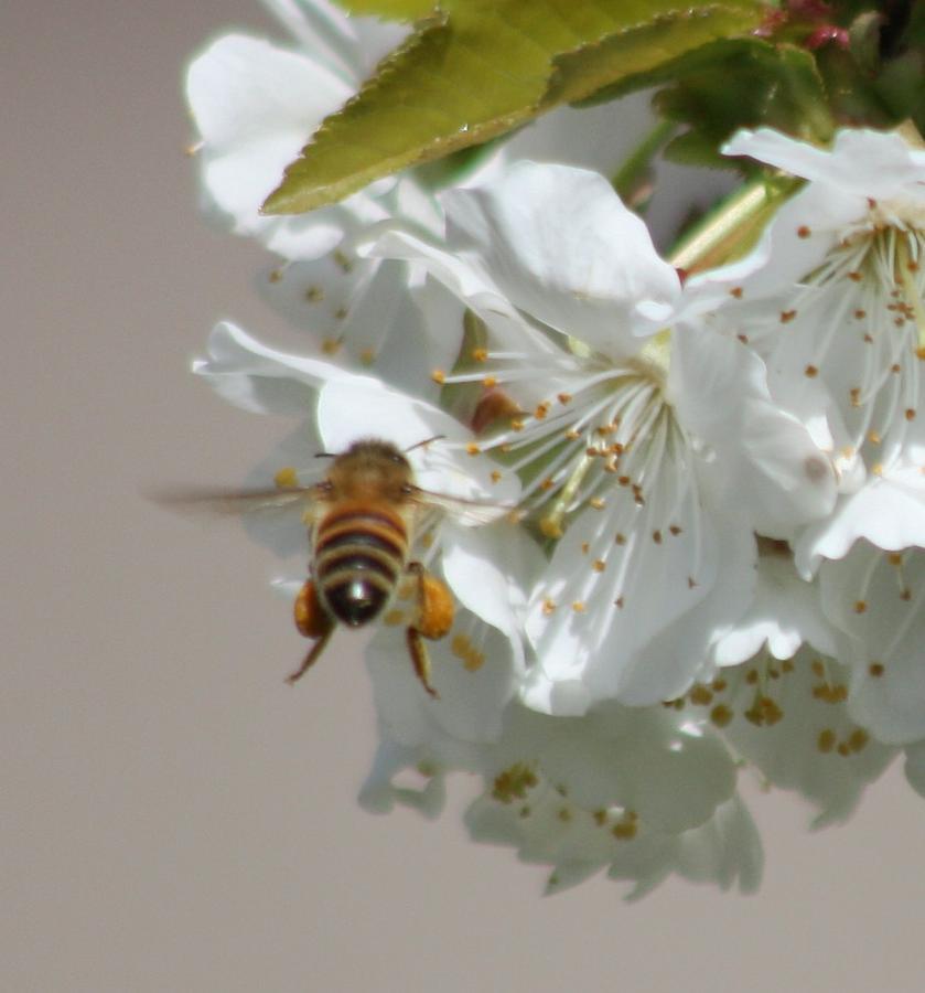 Bees Photograph - Bee Busy by JoAnn Tavani