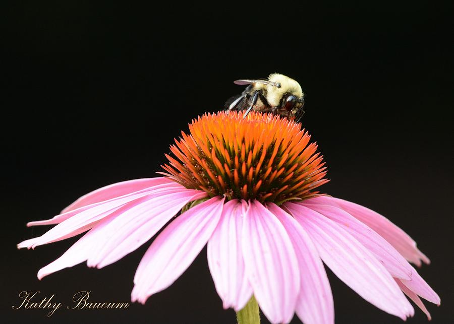 Bee Coneflower Photograph by Kathy Baucum