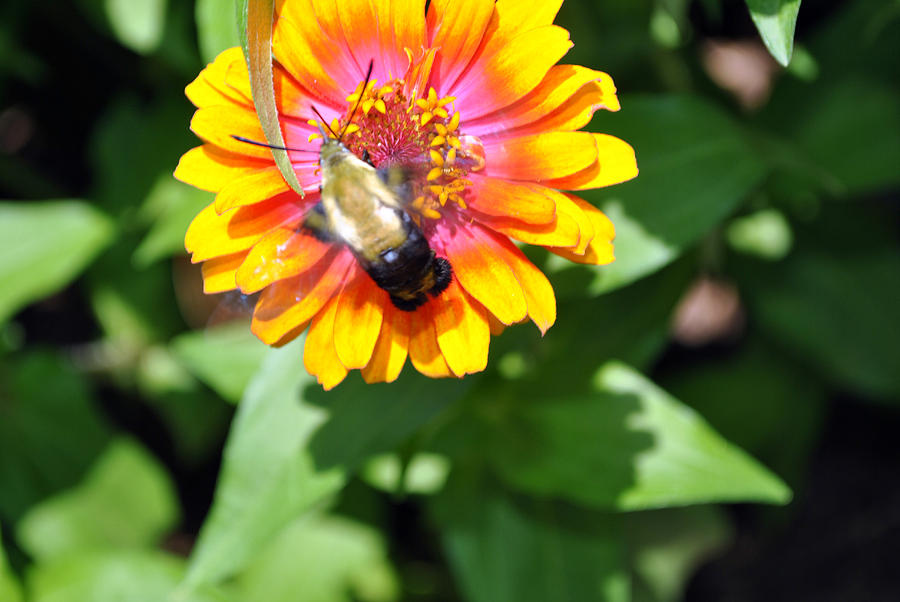 Nature Photography Photograph - Bee Easy by Dion Baker