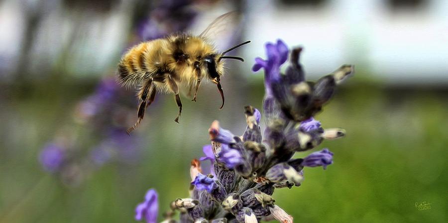 Bee Flying Photograph