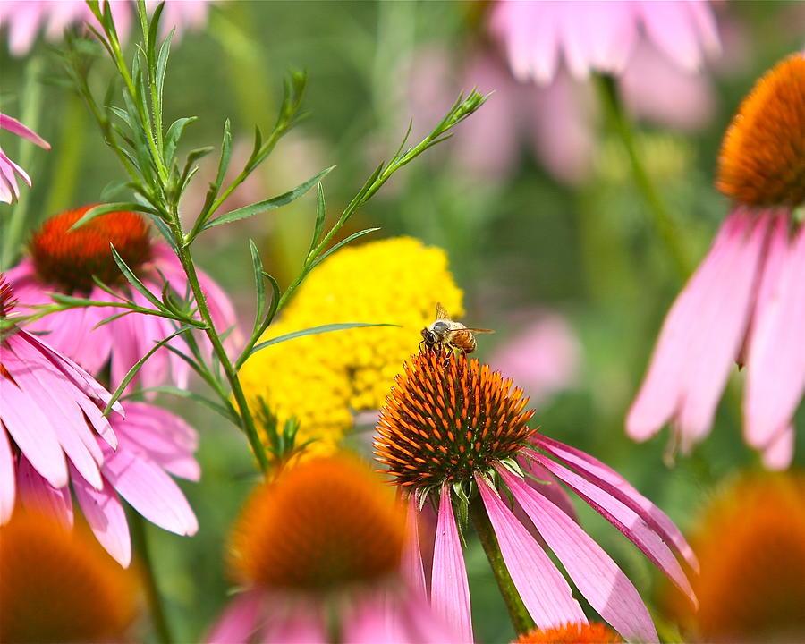 Bee Photograph - Bee Gone by Robert Joseph