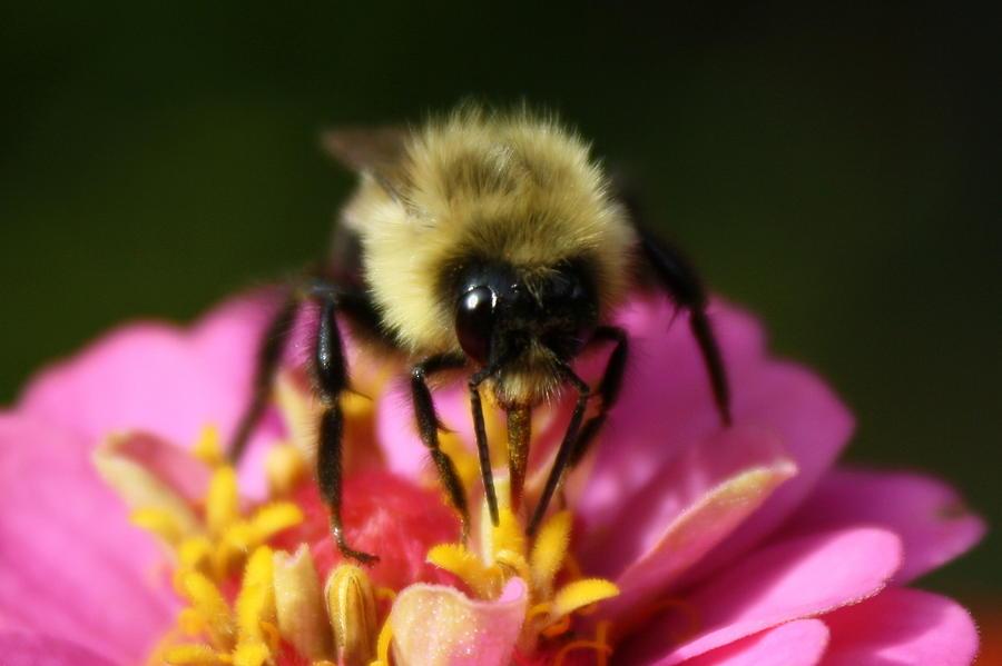 Bee Photograph - Bee Good by Annie Babineau