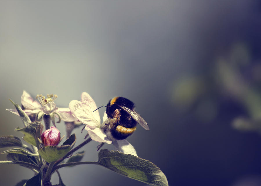Bee Photograph - Bee Happy by Gabriel Calahorra