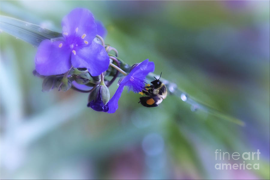 Bee On Flower Photograph - Bee Harmony by Mary Lou Chmura