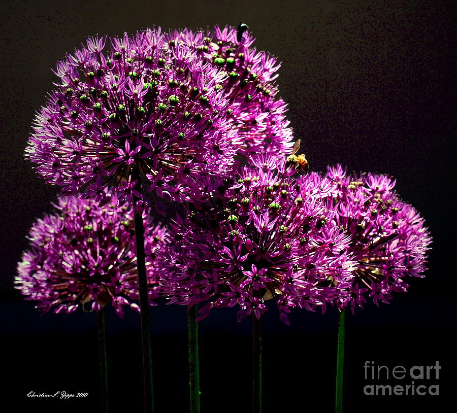 Bee Photograph - Bee I by Christine Zipps