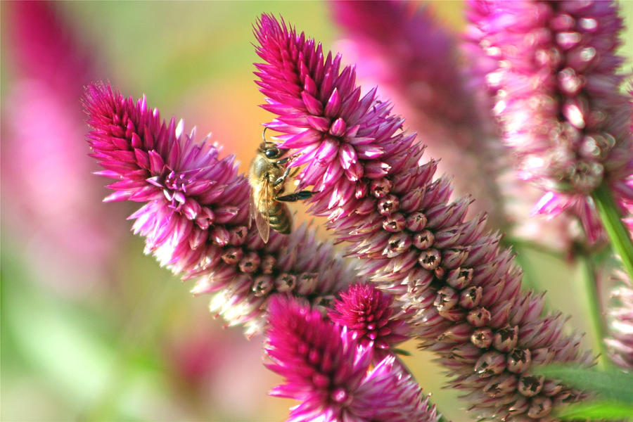 Bees Photograph - Bee Lunch by Gayle Miller