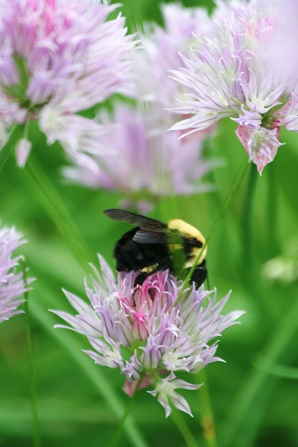 Bee Photograph - Bee by Melanie Beasley