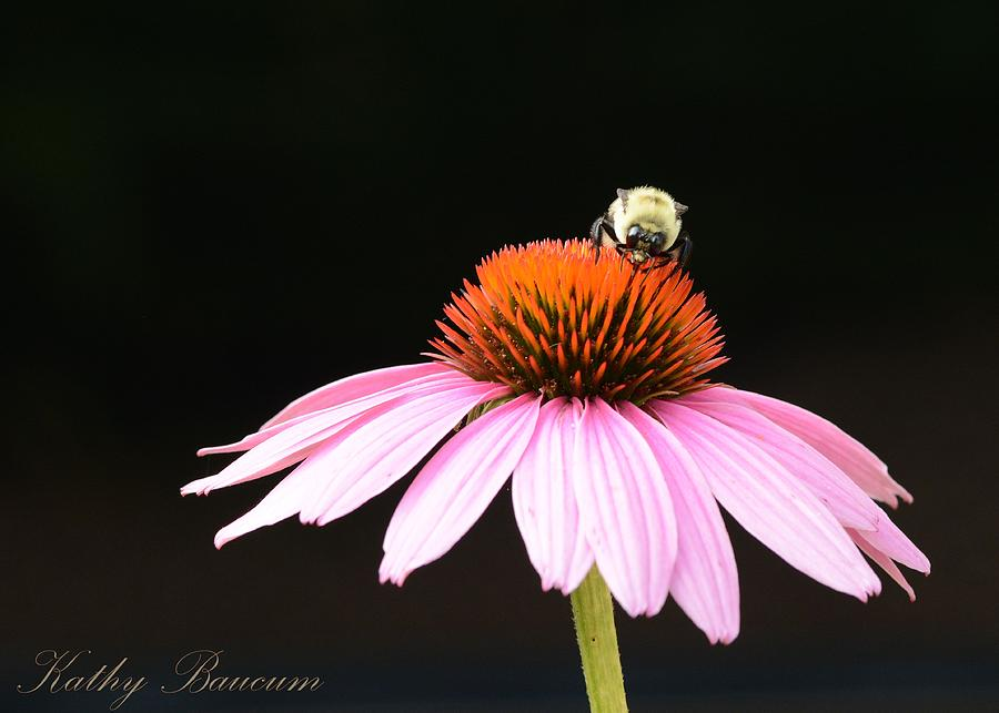 Bee On Coneflower 2 Photograph by Kathy Baucum