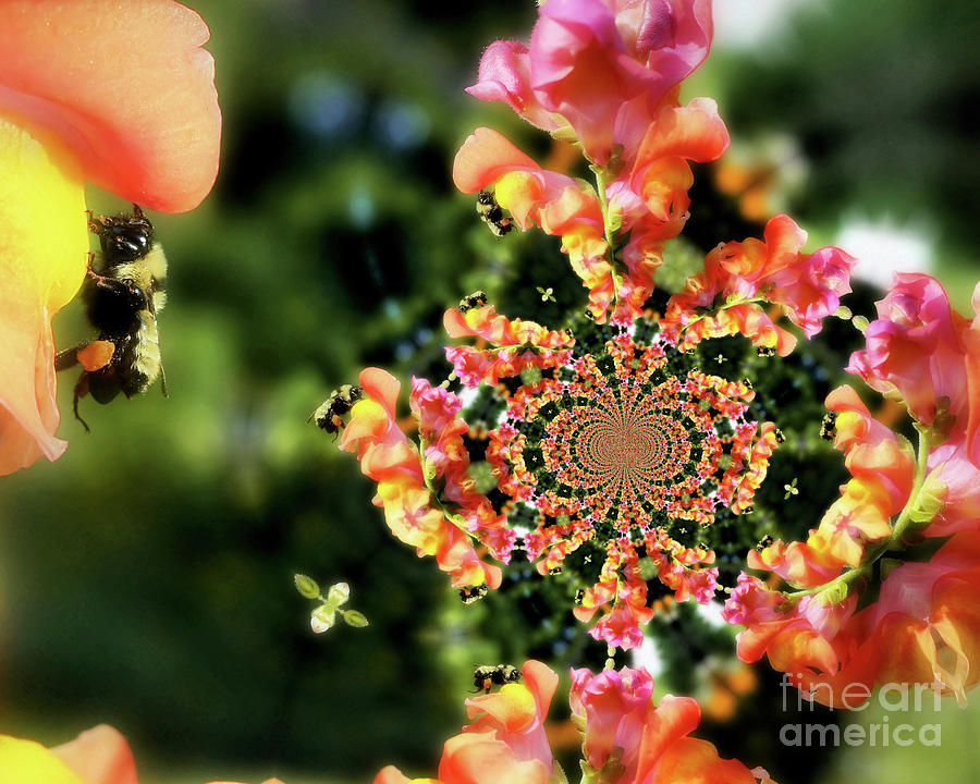 Bumble Bee Photograph - Bee On Snapdragon Flower Abstract by Smilin Eyes  Treasures