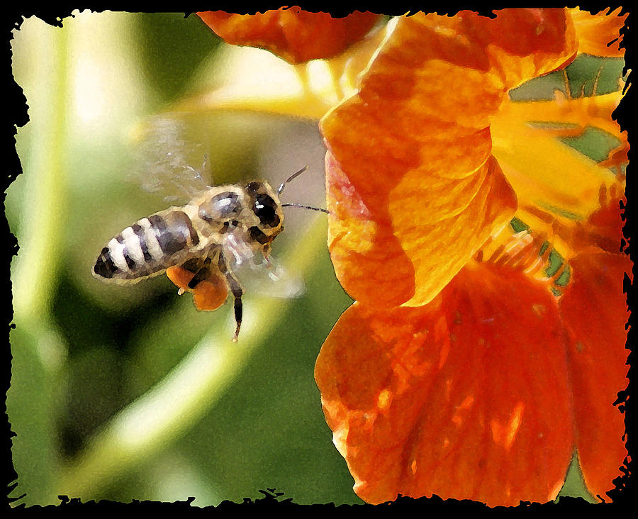 Bee Photograph - Beeee....utiful by Ellen Lerner ODonnell