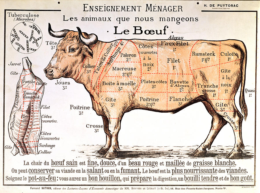 Beef Drawing - Beef by French School