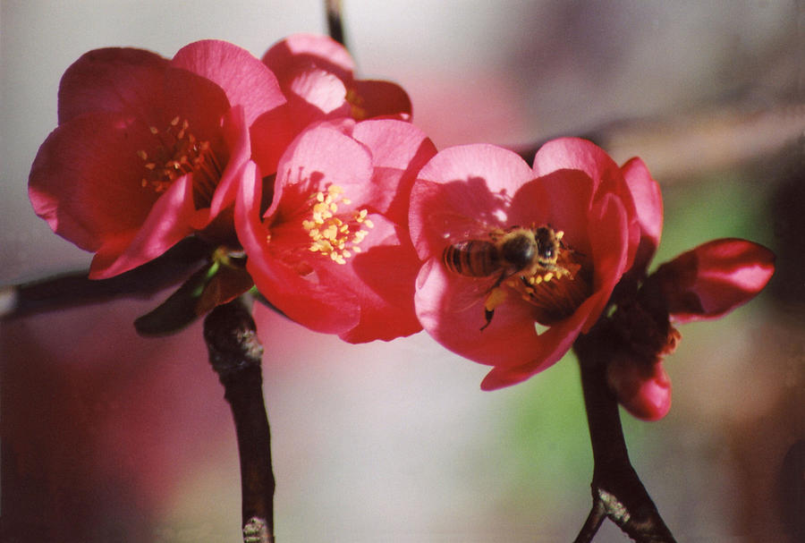 Floral Photograph - Beeing Pretty Busy by Jan Amiss Photography