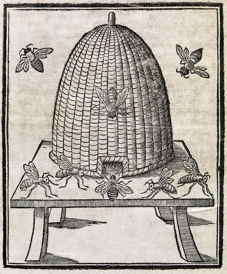 Animal Photograph - Bees And Beehive, 17th Century Artwork by Middle Temple Library