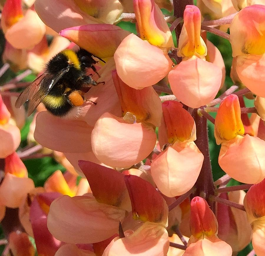Bee Photograph - Bees are Buzzing by Caroline Reyes-Loughrey