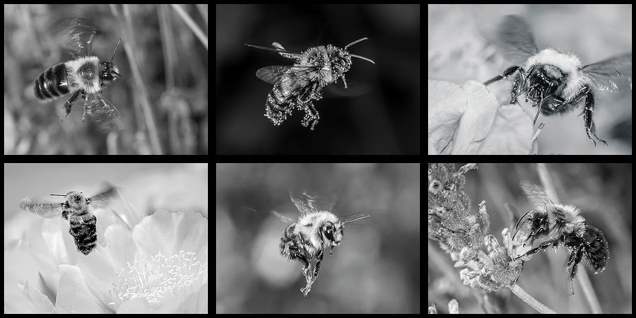Bees in Flight in Black and White by Len Romanick