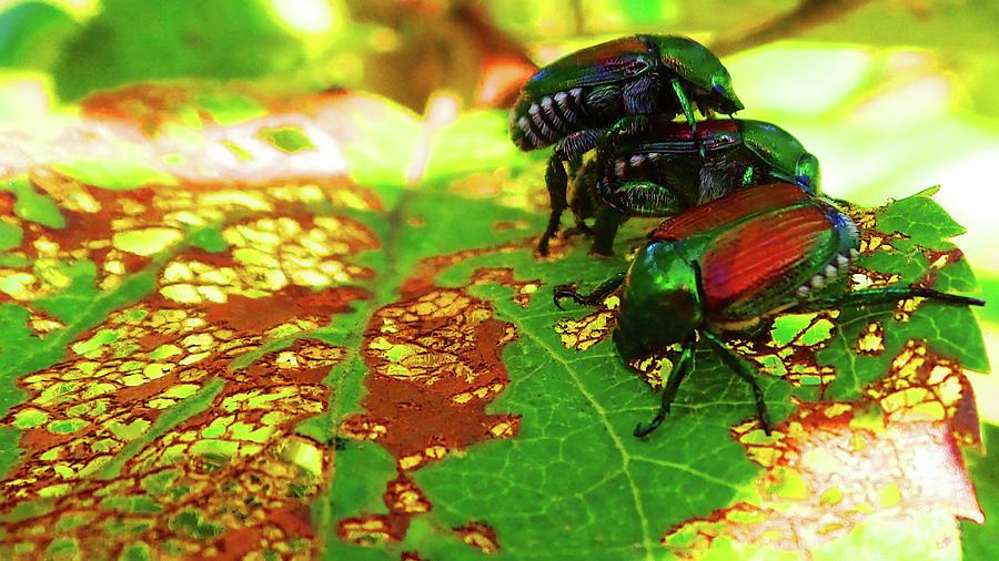 Beetlemania-a Bugs Life Photograph