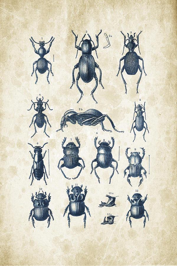 Beetles - 1897 - 01 Digital Art