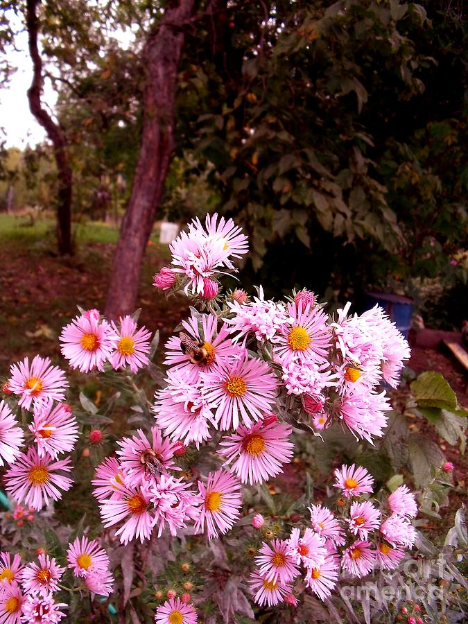 Asters Photograph - Beeze In The Breeze by The Stone Age