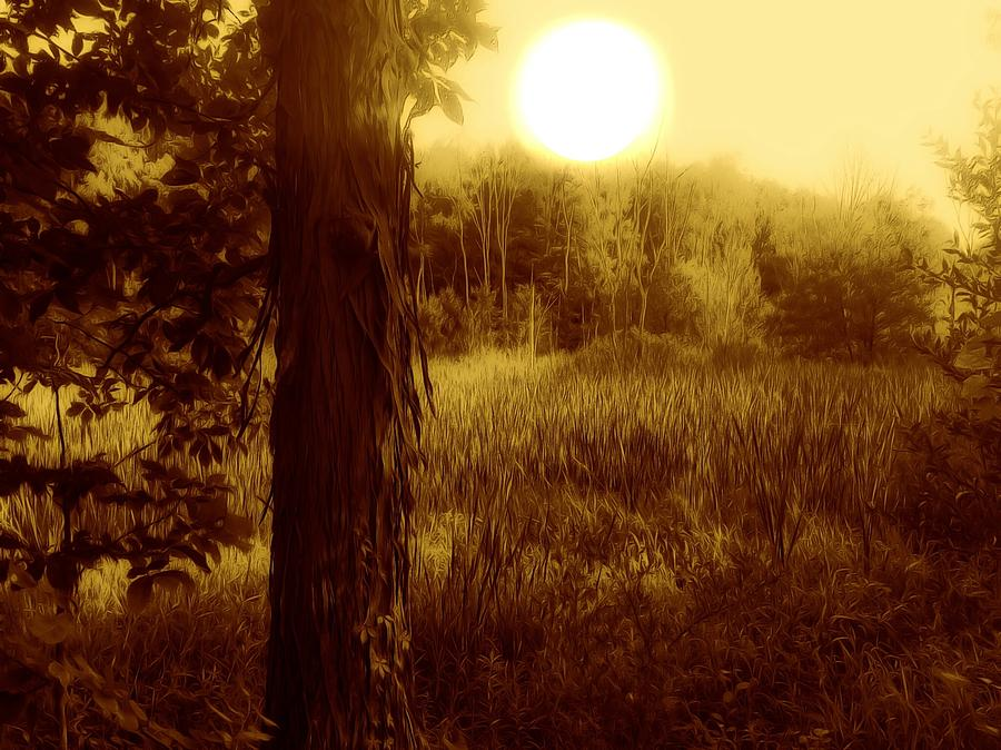 Sun Photograph - Before It Is Gone by Shelley Smith