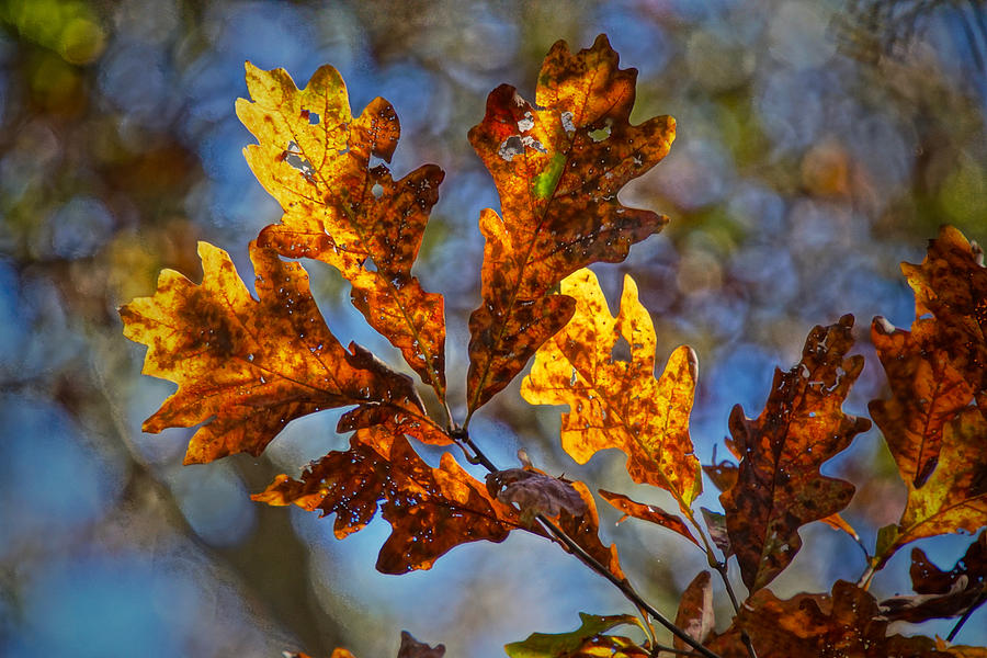 Fall Photograph - Before The Blower by Robert L Jackson