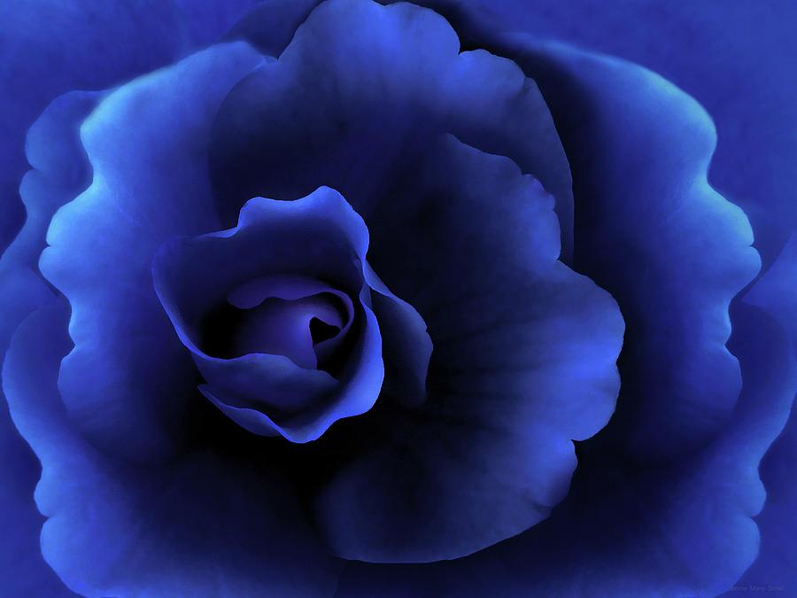Begonia Photograph - Begonia Floral Dark Secrets by Jennie Marie Schell