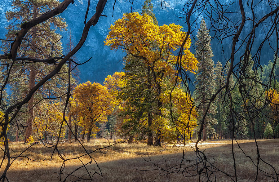Nature Photograph - Behind The Branches by Jonathan Nguyen