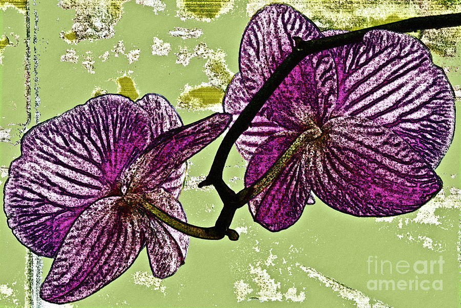 Orchid Photograph - Behind The Orchids by Gwyn Newcombe