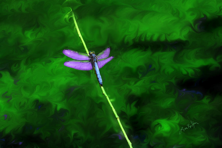 Dragonfly Digital Art - Behind The Scenes by Lisa Redfern